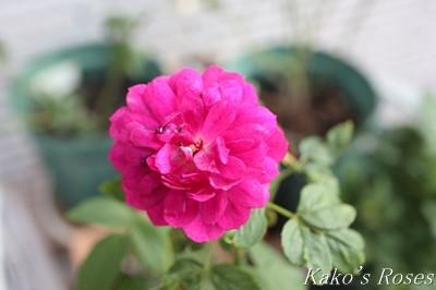 s-IMG_0533kako.jpg
