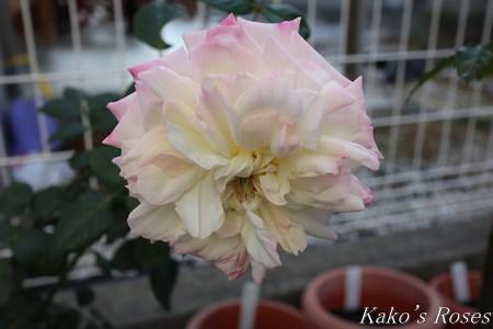s-IMG_0536kako.jpg