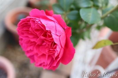 s-IMG_0538kako.jpg