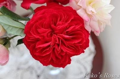 s-IMG_0543kako.jpg