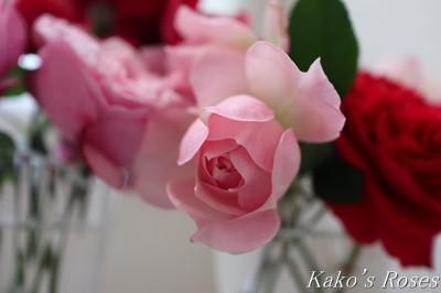 s-IMG_0544kako.jpg