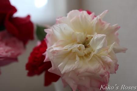 s-IMG_0545kako.jpg