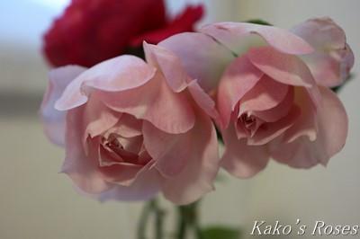 s-IMG_0554kako.jpg