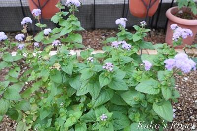 s-IMG_0559kako.jpg