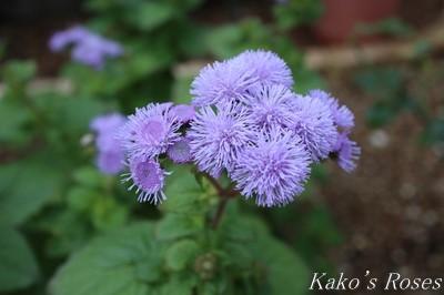 s-IMG_0560kako.jpg