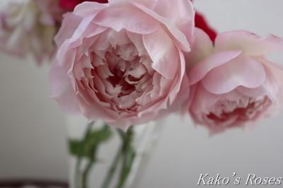 s-IMG_0579kako.jpg