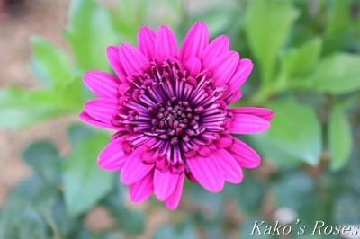 s-IMG_0596kako.jpg