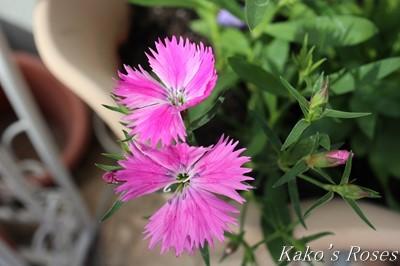s-IMG_0598kako.jpg