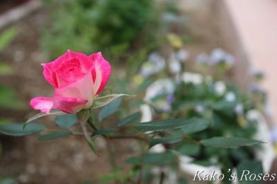 s-IMG_0601kako.jpg