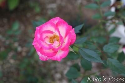 s-IMG_0633kako.jpg