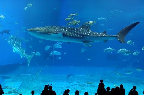 海洋博公園1