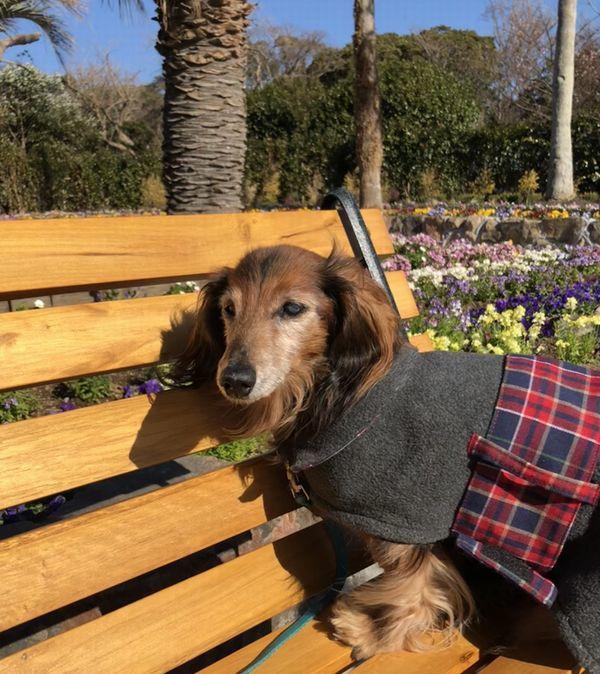 20180115232916ecd四季の花公園