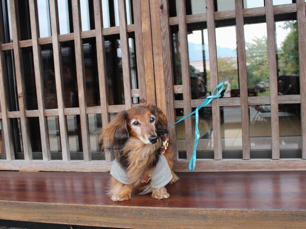 IMG_4296三国街道宿場町の一つ「塩沢宿」
