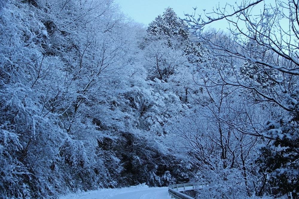 雪カヤ ♪