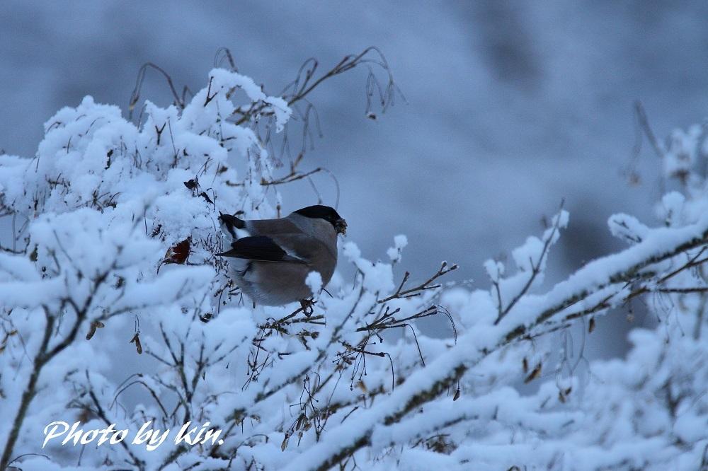 雪ウソ ♪