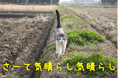 2017032220112072c.png
