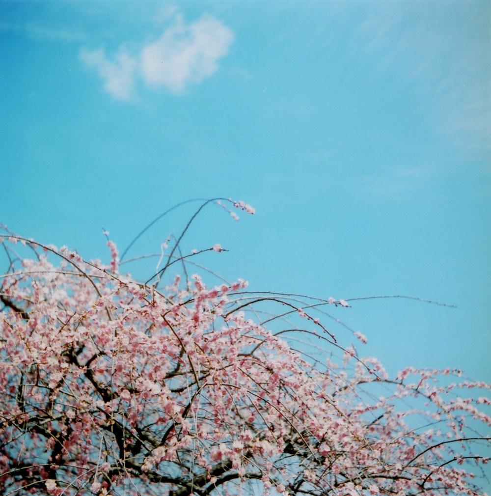 TOY-2134_Yashica.jpg