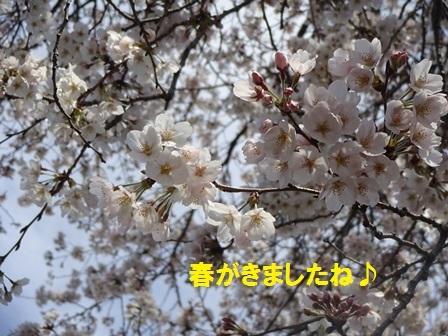 20170405153322c54.jpg