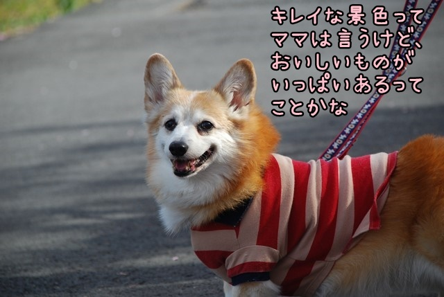 b-DSC_4576.jpg