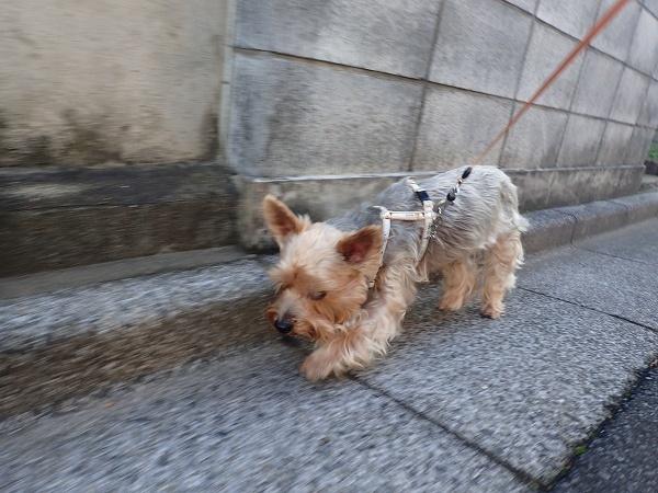(前編)大切なお友達と公園散歩07