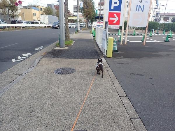 (前編)大切なお友達と公園散歩08