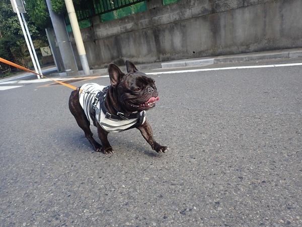 (前編)大切なお友達と公園散歩11