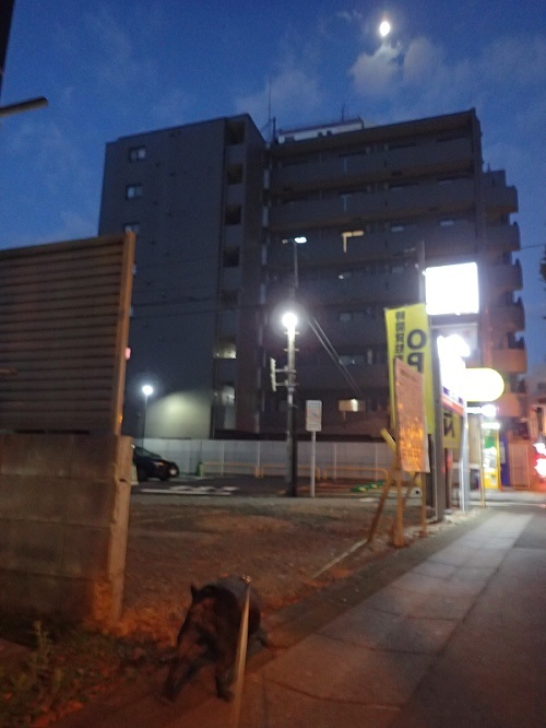 181028調布花火と京太郎とゆず名古屋へ行くup04