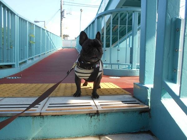 181105⑨この歩道橋の降りる階段は嫌らしいw