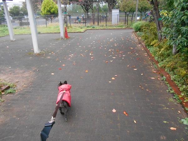 181109少しだけ枝遊びup02色付いた枯葉綺麗