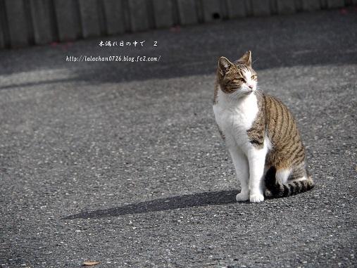 美猫ちゃん