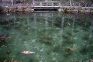 「モネの池」 2017-02-26