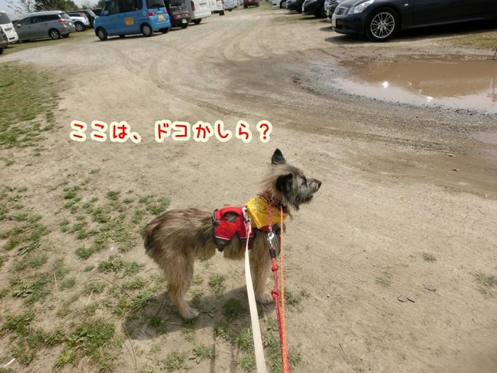CIMG8271.jpg