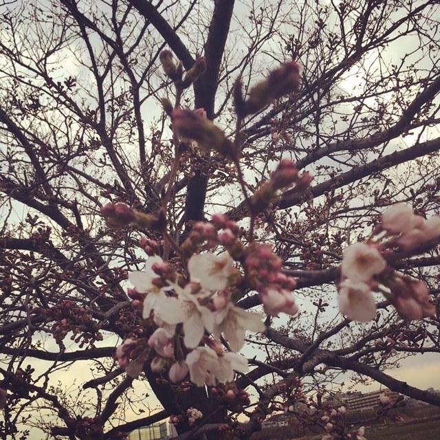 spring2017128.jpg