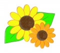 sunflower kids