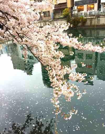 春という季節。