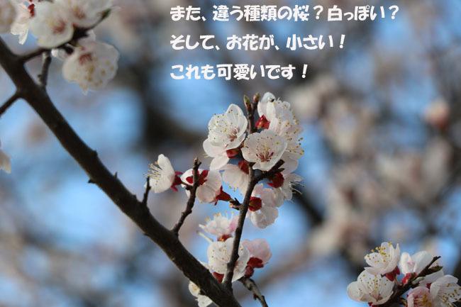 0A1A0339-87654567-98765.jpg