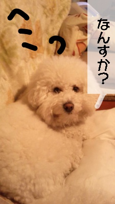 BChekoface3.jpg