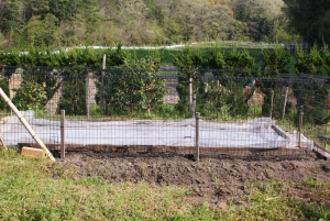 170421苗床を置く場所