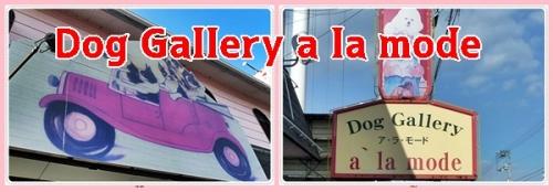 Dog Gallery a la mode
