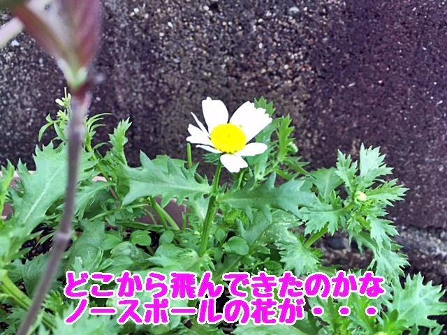 20170419003807f59.jpg