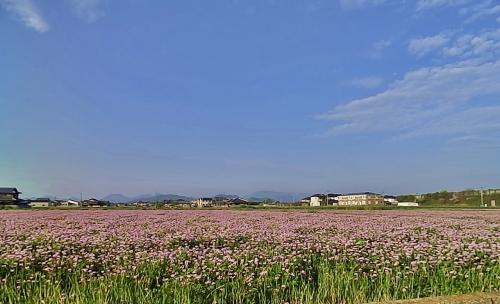 蓮華畑と空