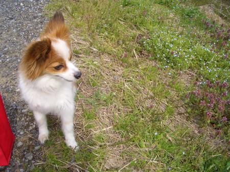 2008sena_harukusa01.jpg