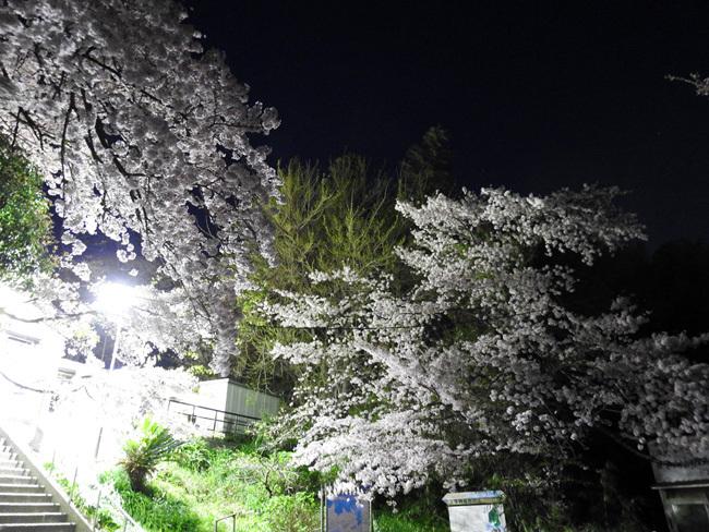 DSCN9695.jpg