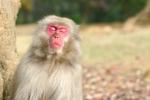 猿と遭遇した夢・・・(;゚Д゚)