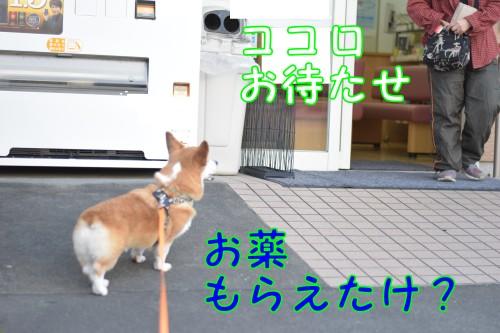 20170213_5.jpg