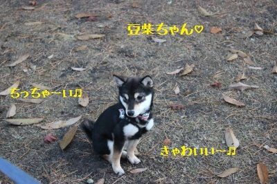 8_IMG_7065.jpg