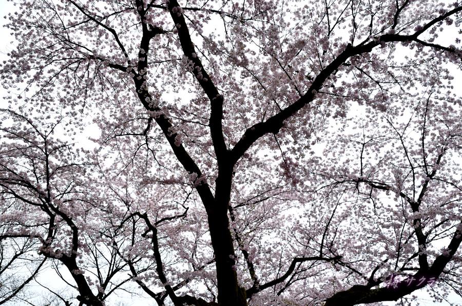 里の春1(1)変更済