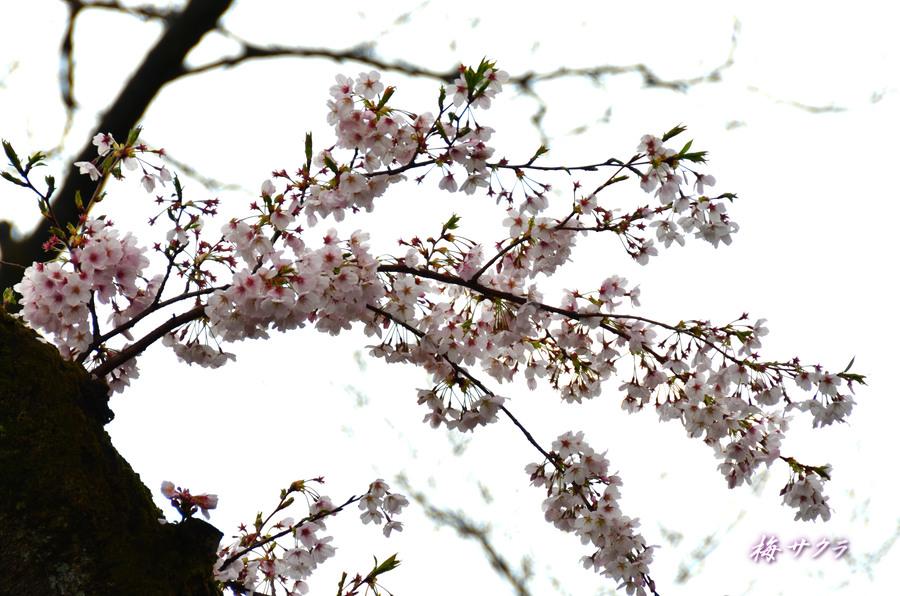 里の春2(3)変更済