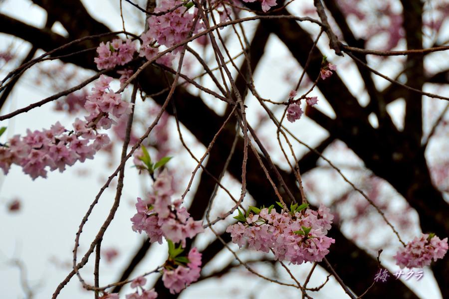 里の春2(7)変更済