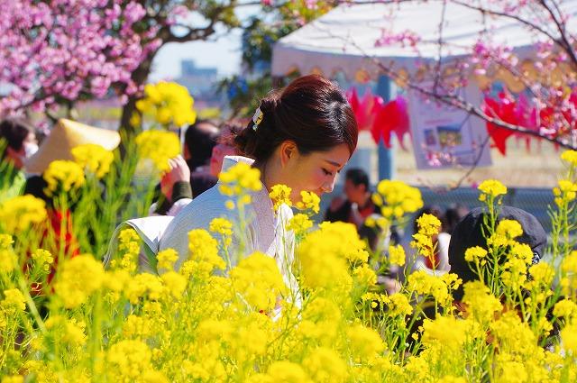 菜の花と天下一ひむか桜 そして綺麗なおね~さん